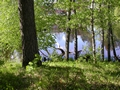 Lapland summer 1