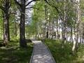 Lapland summer 5